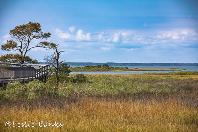Life of the Forest Nature Trail at Assateague Island