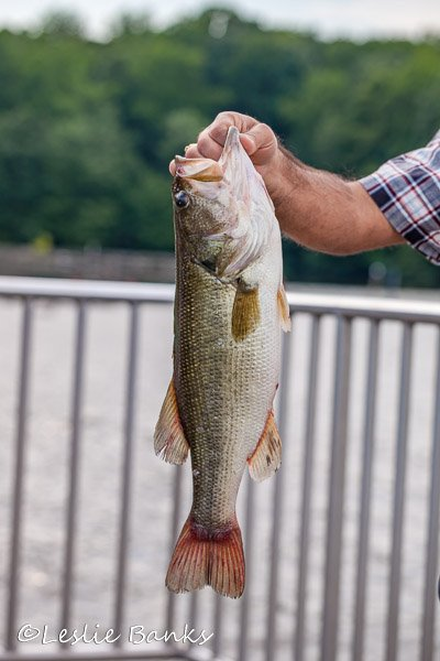 Fisherman holds up his catch of the day at Burke Lake