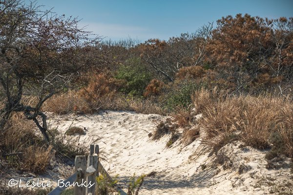Life of the Dunes Nature Trail at Assateague Island