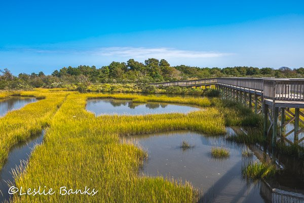 Life of the Marsh Nature Trail at Assateague