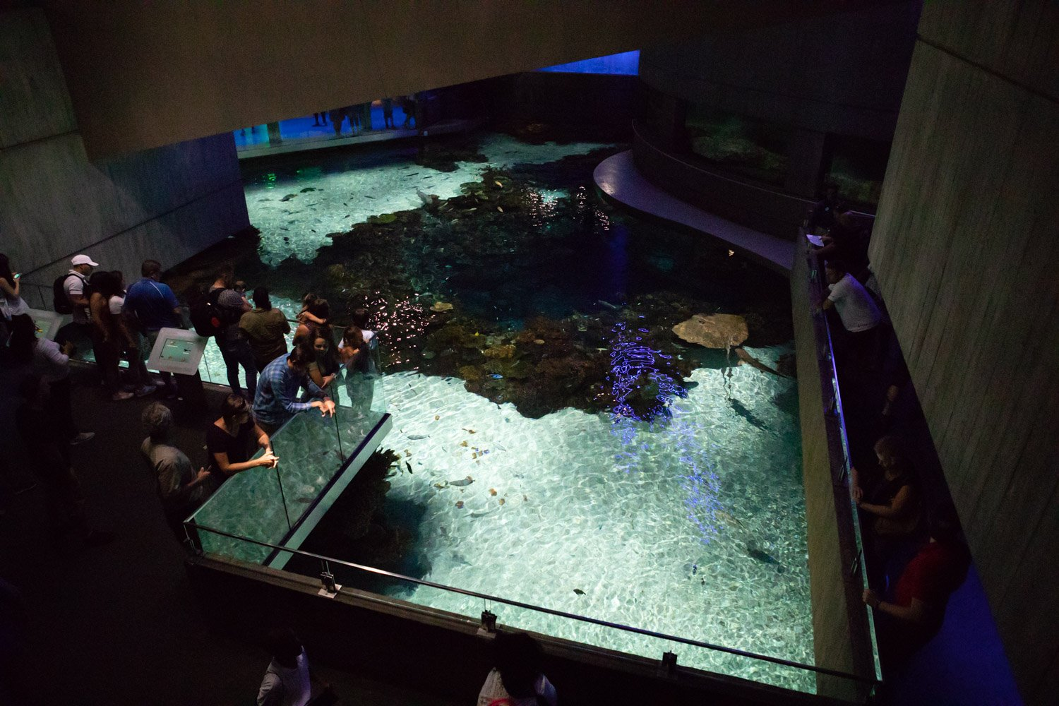 Blacktip Reef Exhibit